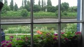 looking-out-the-window-at-the-ship-tavern-mortlake-england_27576738433_o
