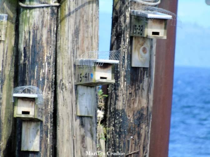 Bird_house_on_pilings_0489