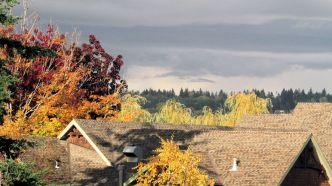 fall colours_1523