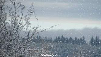 falling snow_2107