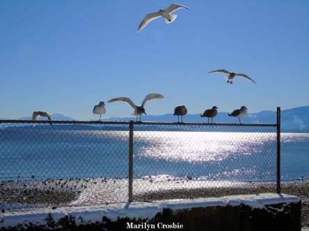 A gull's playground_SC00938